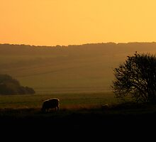 Cuckmere Haven by vistavie79