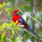PhotoImpression :: Crimson Rosella 1 by Imageo