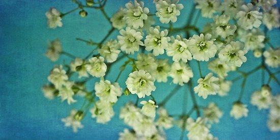 fiorellino by Priska Wettstein