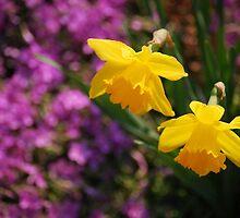 Yellow Daffodils by Irishshys