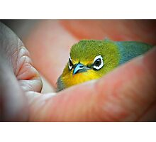 A bird in the Hand is worth two in the Bush Photographic Print