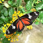 Macro Butterfly - Franklin Park Conservatory by Tyler Stierhoff