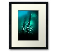 Fish schooling under the Rapid Bay jetty - South Australia Framed Print