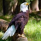 1 Proud Eagle by Julie Everhart