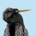 Anhinga Portrait by Rosalie Scanlon