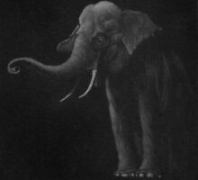 Elephant by Anthony DiMichele