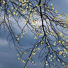 April Light by Mary Ann Reilly