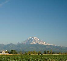 Mount Rainier and Cornfield by Stacey Lynn Payne
