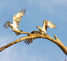 West Coast Eagles - Fremantle by Paul Fulwood