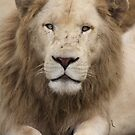 White Lion.. by Steve Bullock