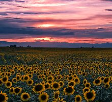 The Field of Dreams by John  De Bord Photography