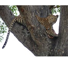Leopard protecting her kill Photographic Print