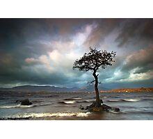 The Tree Photographic Print