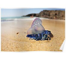 Portuguese Man of War Poster