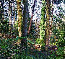 Woodland Springtime! by artfulvistas