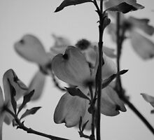 Soft Dogwood by Sunshinesmile83
