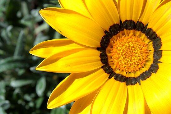 Yellow flower 6214 by João Castro