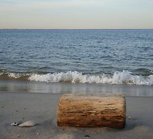 Driftwood on the Jersey Shore by Michele Ford