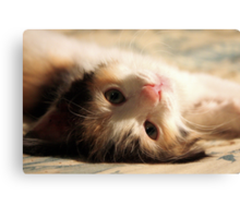 I know you want me .. I iz so cute ? Canvas Print