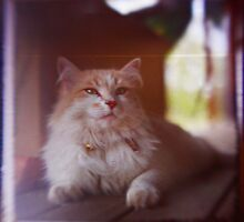Happy Cat by VigourGraphics