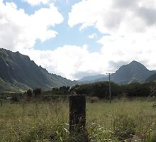 Kualoa Ranch by Yacoub Hilweh