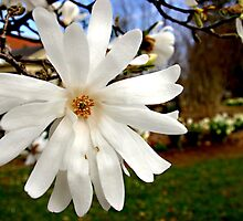 Spring to Life by Lauren Neely