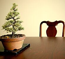 Little Bonsai Tree by Lauren Neely