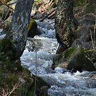 Brook Going Wild by HELUA