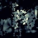 Spring Blossom by Karen  Betts