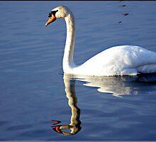 Swan Lake by Lauren Neely