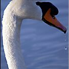 Swan Profile by Lauren Neely