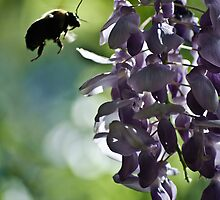 checking out the wisteria by Phillip M. Burrow