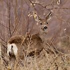 """""""I Ears You ..."""" by Barb Miller"""