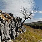 Limestone, Tree and Dale by Stuart1882