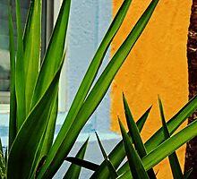 florida brightness by Lynne Prestebak