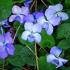 """""""Pine Needles And Wild Violets"""" by franticflagwave"""