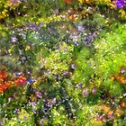 Meadowstars in Manx by RC deWinter