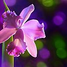 fantasy orchid by picketty