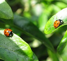 Two ladybirds going their own way by KatDoodling