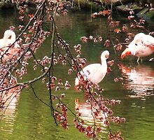 flamingo's in the pink at colchester zoo by MichelleRees