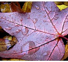 Calenda Leaves by Gozza