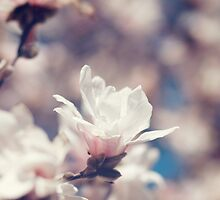 spring blossoms by brianphoto