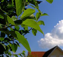Spring leaves by Nordlys