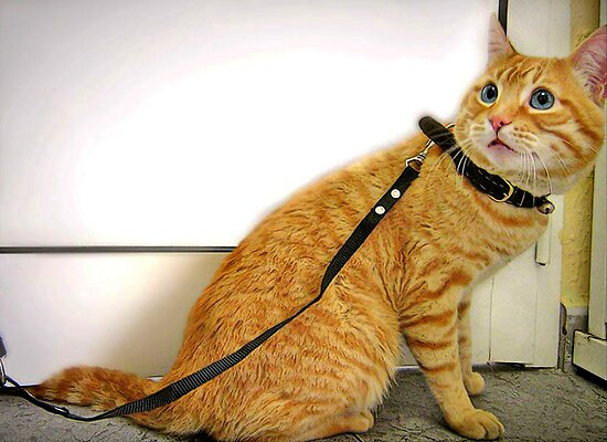 Who told you that I am a dog? I don&#x27;t need this stupid leash! by Maria  Gonzalez