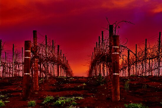 """""""Winter In The Vines"""" by Phil Thomson IPA"""