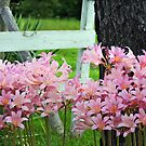 All Dressed in Pink by Susan Blevins