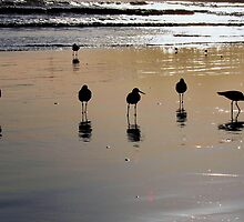 9 Sand Pipers by Stephen Burke