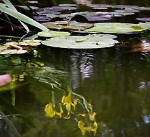 Pool of Reflections by LauraBroussard