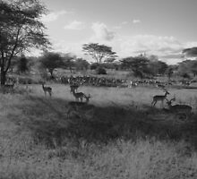 Wildlife in the Serengeti by jgannon