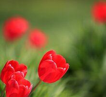 Three Little Blossoms by Sara Johnson